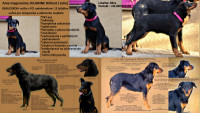 Beauceron s PP